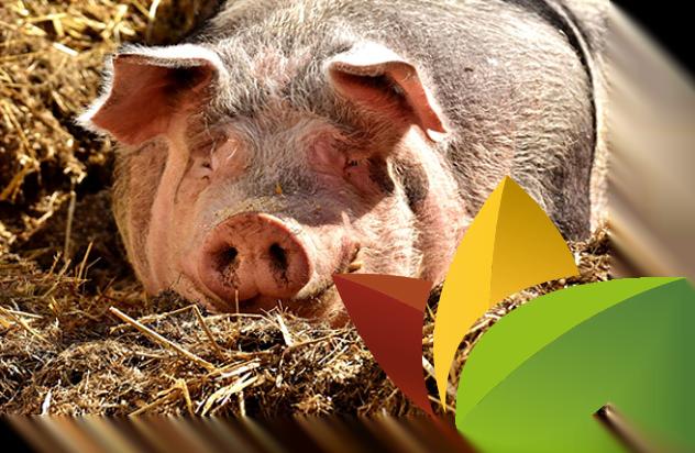 diervoeding varkens - Wijnen Welten agro