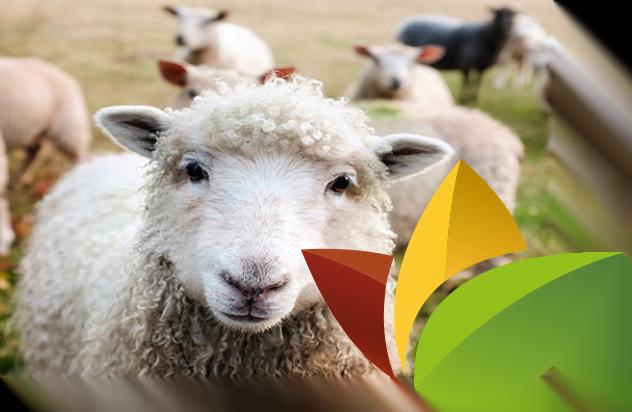 schapen geiten herten diervoeding Wijnen Welten
