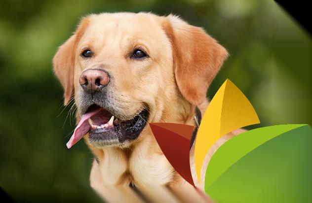 wijnen welten agro - diervoeding honden